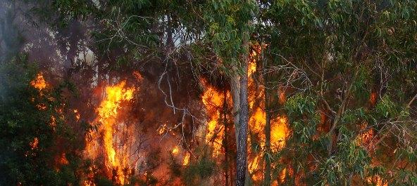 Homem de 46 anos detido por atear incêndio em Avelãs de Caminho