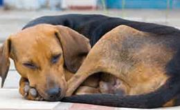 Anadia: Centro de Recolha de Animais intermunicipal é bem-vindo