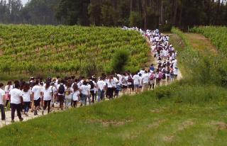 Consolidação  da Caminhada pelo Coração  envolve 300 participantes