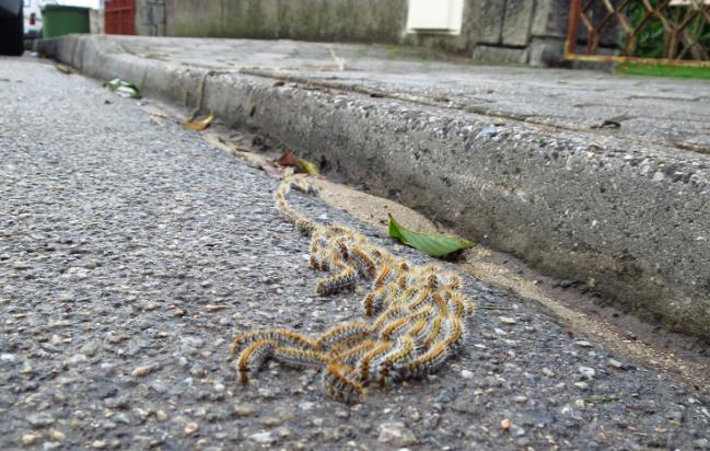 Vizinhos do hospital em risco de saúde devido a lagartas