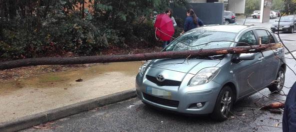 Anadia: Viatura ligeira atingida por queda de árvore