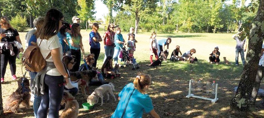Mealhada: Quatro Patas e Focinhos  promove 4.ª Cãominhada