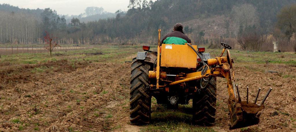 """Vagos: """"Irregularidades"""" impedem agricultores de receber apoios do Estado"""