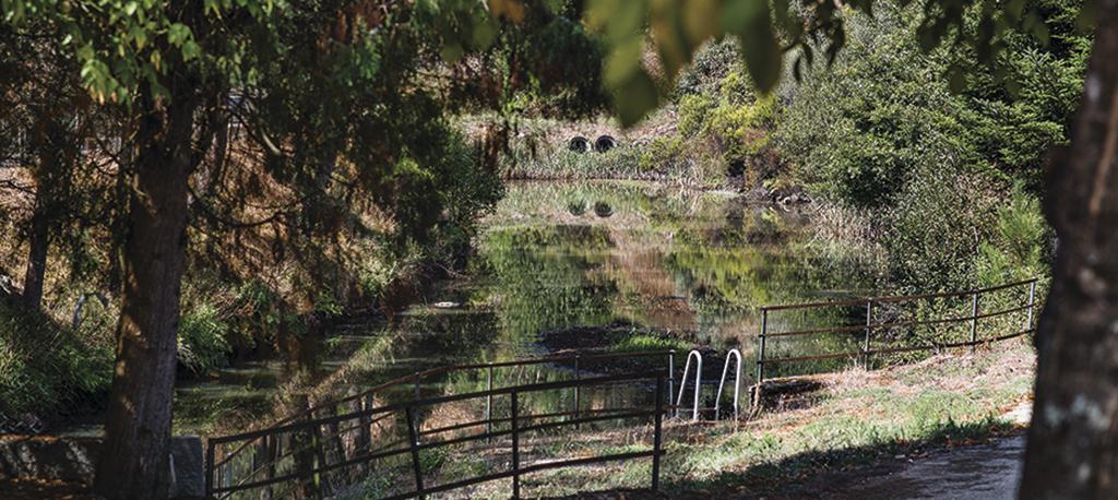 Anadia: Juntas esclarecem sobre limpeza da floresta