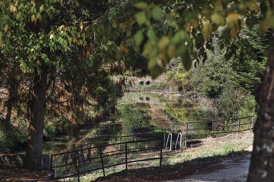Juntas de Freguesia de Anadia sensibilizam para a limpeza da floresta