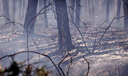 Cantanhede: Secretário de Estado das Florestas participa em ação de reflorestação na freguesia da Tocha