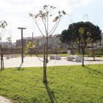 Autarquia de Vagos requalifica espaço degradado na entrada da vila