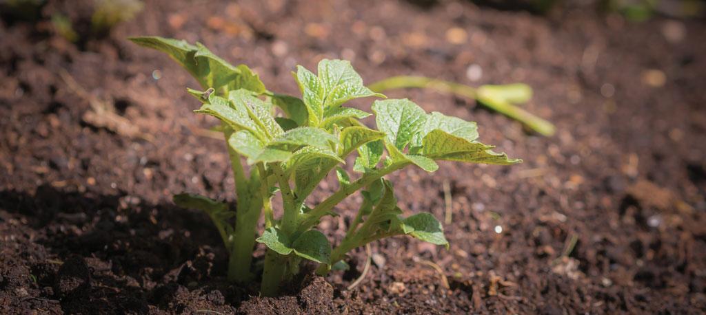 Anadia: Agricultura sustentável é o tema do IX Jantar Conferência do JB