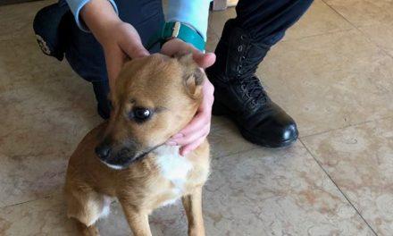 Águeda: Detido em flagrante por maltratar cão