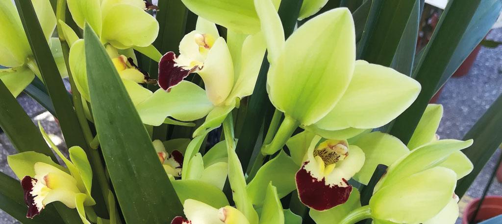 Cantanhede: Município promove 1.ª Exposição de Orquídeas