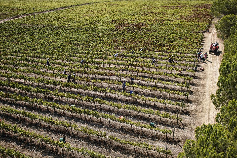 Bairrada lança vídeo com mensagem de união no setor dos vinhos