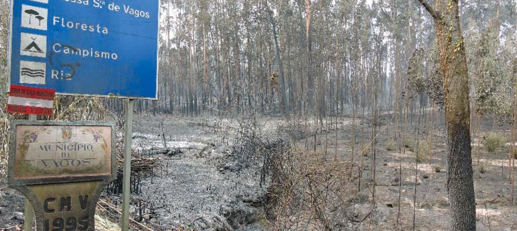 ICNF aprova Plano de Defesa da Floresta contra Incêndios em Vagos