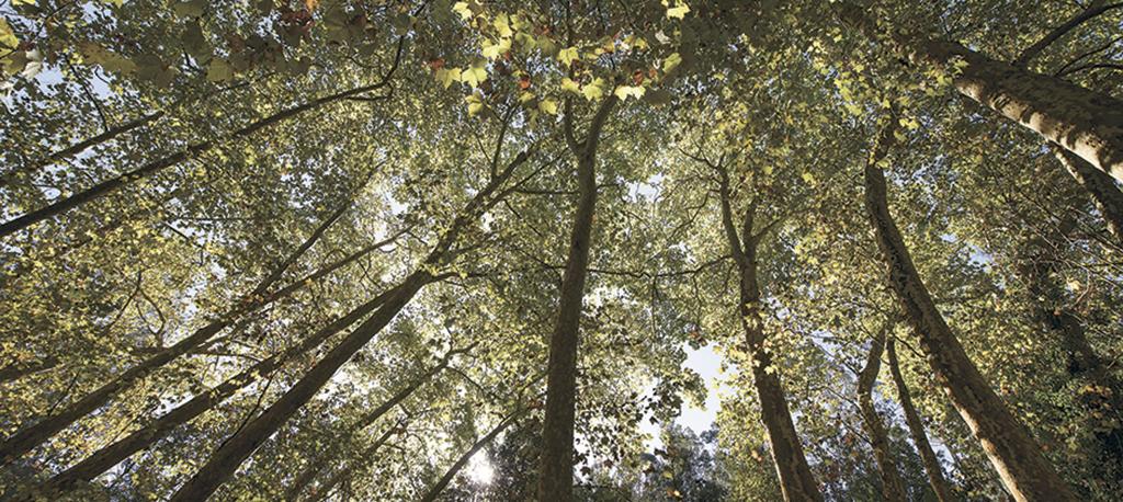 Anadia: Limpeza da floresta serve de mote a ações de formação