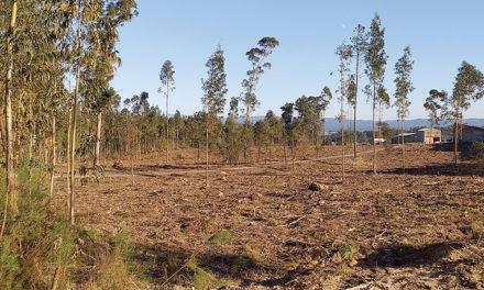 Autarquia limpa terrenos nas zonas industriais