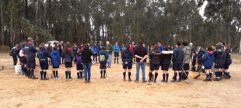 Avelãs de Cima: Escuteiros regressam e plantam mil pinheiros  no local onde acamparam no último verão