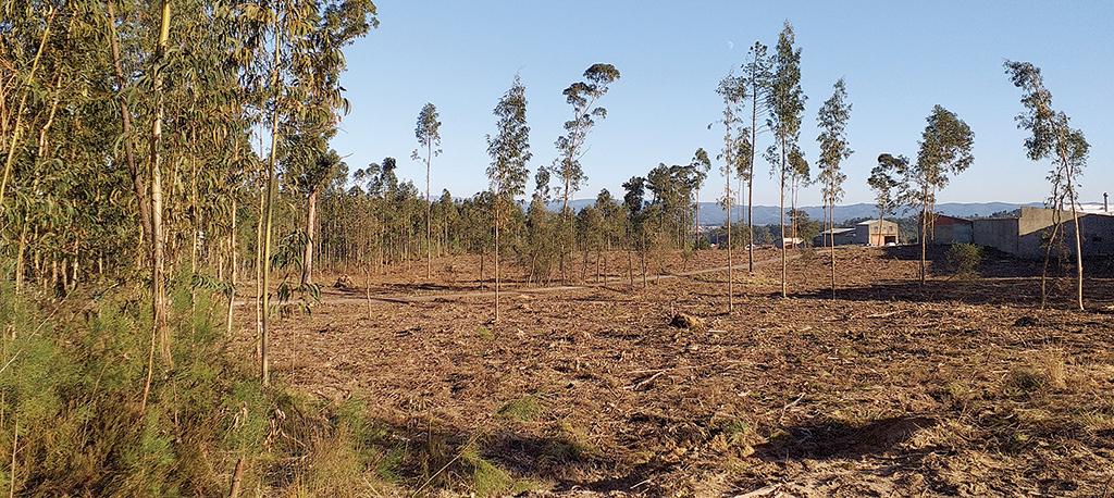 Incêndios: Proprietários com prazo alargado até 31 de maio para limpeza de terrenos