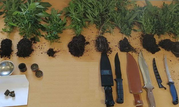 Apreensão de cannabis e haxixe em Sangalhos