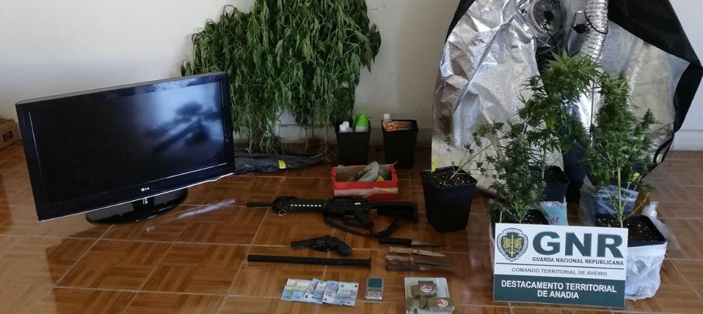 GNR desmantelou rede de tráfico de droga que operava em Anadia e Oliveira do Bairro