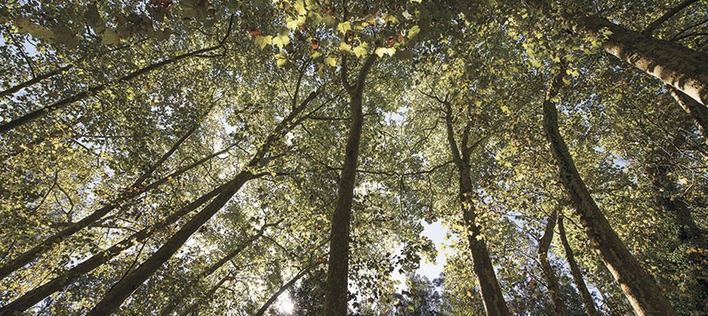 Anadia: Três associações envolvidas na vigilância florestal