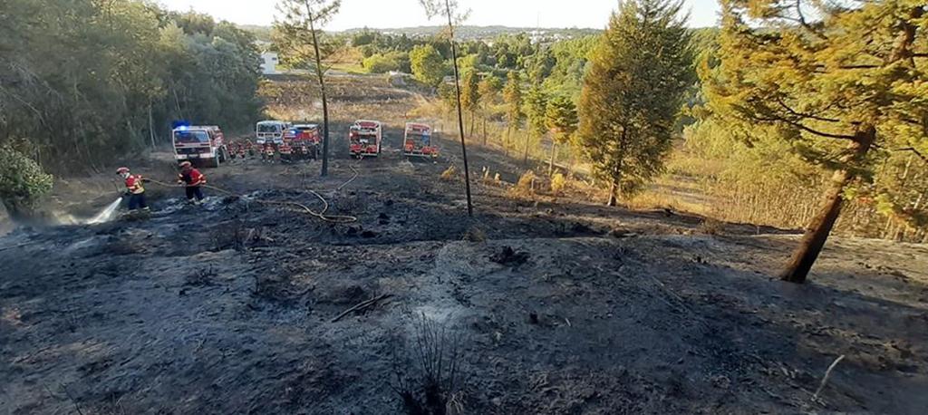 Cantanhede: Incêndio em Ançã queimou mais de 16 mil metros quadrados de floresta